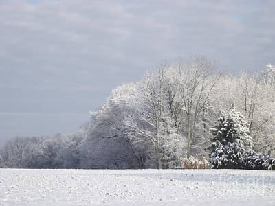 Photograph - Winter Serenity by Michelle Welles