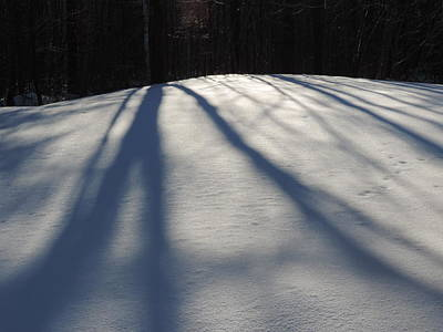 Photograph - Winter Shadows by Bill Tomsa