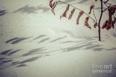 Photograph - Winter Shadows by Cheryl Baxter