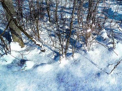 Photograph - Winter Shadows by Claire Bull