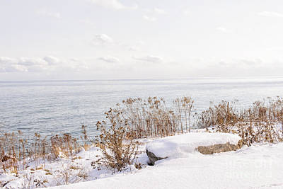 Park Scene Photograph - Winter Shore Of Lake Ontario by Elena Elisseeva