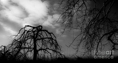 Photograph - Winter Silhouette  by Michael Arend