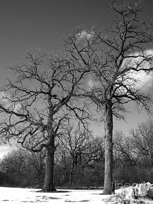 Photograph - Winter Sisters by Jennifer E Doll