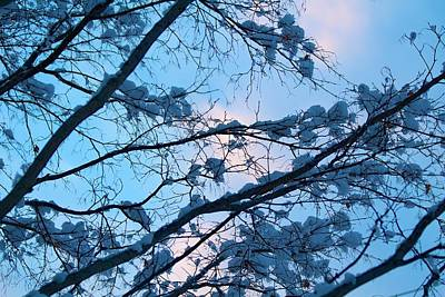 Nirvana - Winter sky and snowy Japanese Maple by Allan Morrison