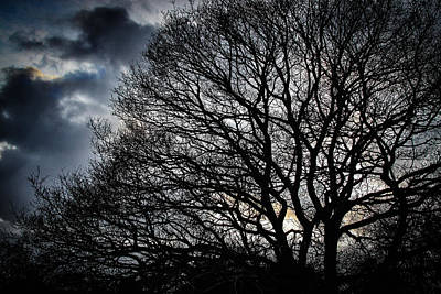 Photograph - Winter Sky And Tree by Dave Hall