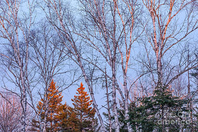 Photograph - Winter Sky by Susan Cole Kelly