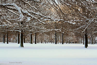 Photograph - Winter Snow  by Ann Murphy