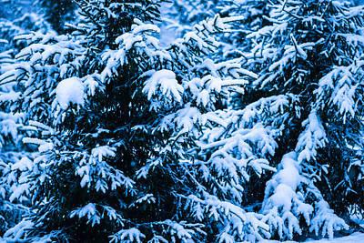 Christmas Holiday Scenery Photograph - Winter Snow Christmas Tree 10 by Alexander Senin