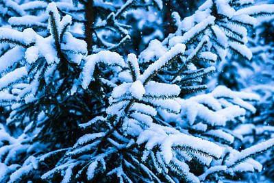 Christmas Holiday Scenery Photograph - Winter Snow Christmas Tree 11 by Alexander Senin