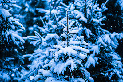 Christmas Holiday Scenery Photograph - Winter Snow Christmas Tree 12 by Alexander Senin