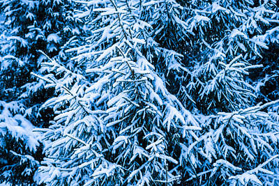 Christmas Holiday Scenery Photograph - Winter Snow Christmas Tree 2 by Alexander Senin