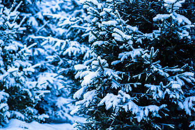 Black And White Horse Photography - Winter Snow Christmas Tree 3 by Alexander Senin