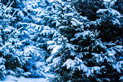 Christmas Holiday Scenery Photograph - Winter Snow Christmas Tree 3 by Alexander Senin