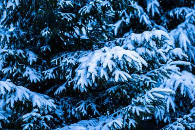 Christmas Holiday Scenery Photograph - Winter Snow Christmas Tree 4 by Alexander Senin