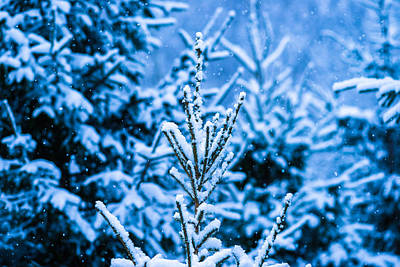 Christmas Holiday Scenery Photograph - Winter Snow Christmas Tree 5 by Alexander Senin