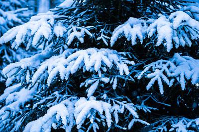 Christmas Holiday Scenery Photograph - Winter Snow Christmas Tree 6 by Alexander Senin