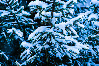 Christmas Holiday Scenery Photograph - Winter Snow Christmas Tree 7 by Alexander Senin