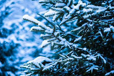 Christmas Holiday Scenery Photograph - Winter Snow Christmas Tree 9 by Alexander Senin