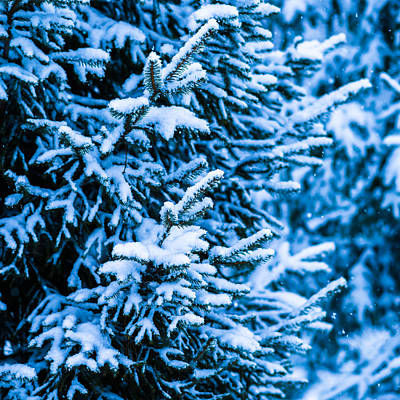 Christmas Holiday Scenery Photograph - Winter Snow Christmas Tree - Square 1 by Alexander Senin
