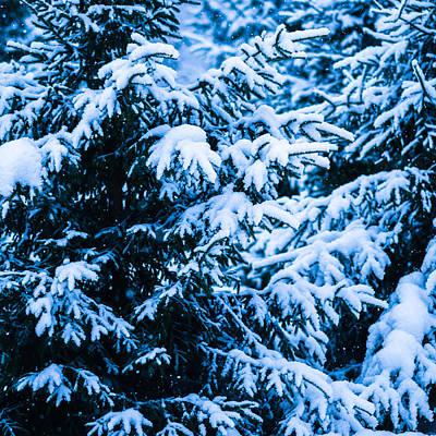Christmas Holiday Scenery Photograph - Winter Snow Christmas Tree - Square 10 by Alexander Senin