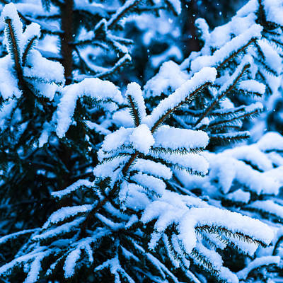 Christmas Holiday Scenery Photograph - Winter Snow Christmas Tree - Square 11 by Alexander Senin