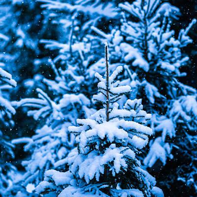 Christmas Holiday Scenery Photograph - Winter Snow Christmas Tree - Square 12 by Alexander Senin