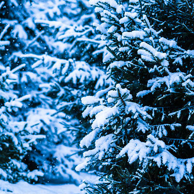 Christmas Holiday Scenery Photograph - Winter Snow Christmas Tree - Square 3 by Alexander Senin