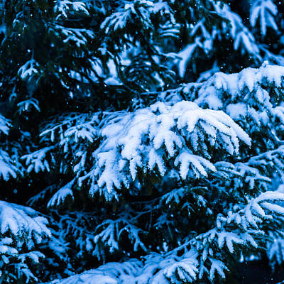 Christmas Holiday Scenery Photograph - Winter Snow Christmas Tree - Square 4 by Alexander Senin