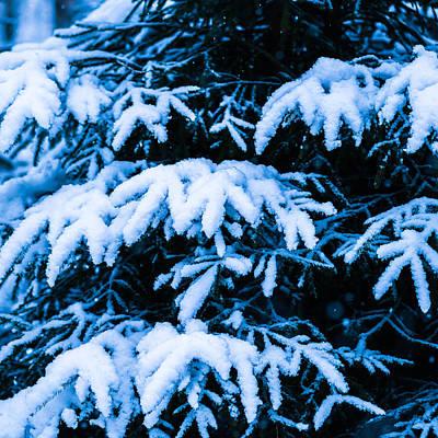 Christmas Holiday Scenery Photograph - Winter Snow Christmas Tree - Square 6 by Alexander Senin
