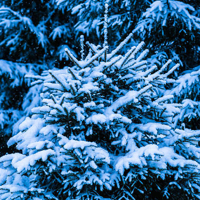 Christmas Holiday Scenery Photograph - Winter Snow Christmas Tree - Square 8 by Alexander Senin