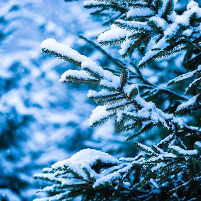 Christmas Holiday Scenery Photograph - Winter Snow Christmas Tree - Square 9 by Alexander Senin