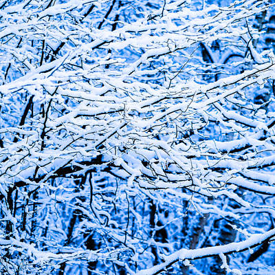 Christmas Holiday Scenery Photograph - Winter Snow Forest - Square 10 by Alexander Senin