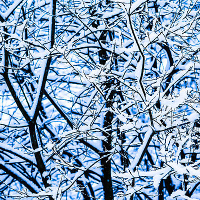 Christmas Holiday Scenery Photograph - Winter Snow Forest - Square 11 by Alexander Senin