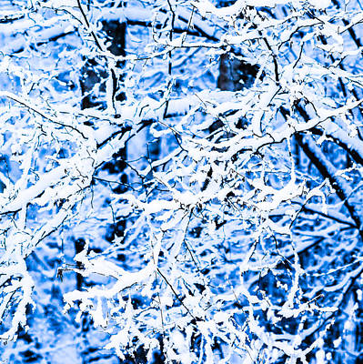 Christmas Holiday Scenery Photograph - Winter Snow Forest - Square 12 by Alexander Senin