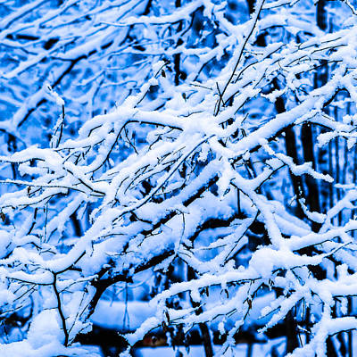 Christmas Holiday Scenery Photograph - Winter Snow Forest - Square 2 by Alexander Senin