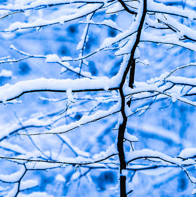 Christmas Holiday Scenery Photograph - Winter Snow Forest - Square 3 by Alexander Senin