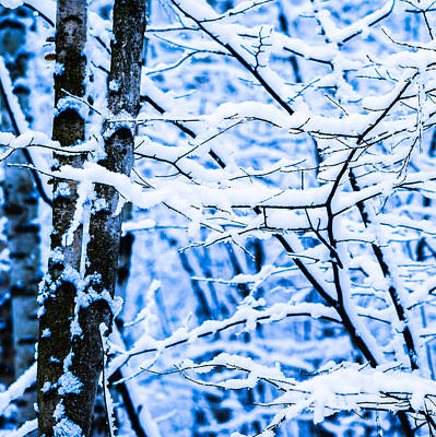 Christmas Holiday Scenery Photograph - Winter Snow Forest - Square 4 by Alexander Senin
