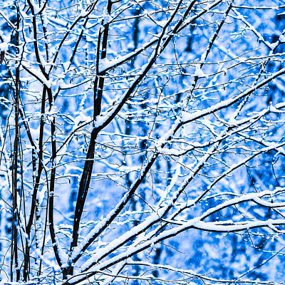 Christmas Holiday Scenery Photograph - Winter Snow Forest - Square 7 by Alexander Senin