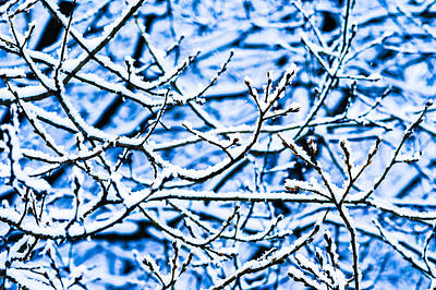 Christmas Holiday Scenery Photograph - Winter Snow Forest 1 by Alexander Senin