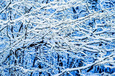 Christmas Holiday Scenery Photograph - Winter Snow Forest 10 by Alexander Senin