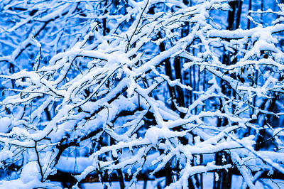 Christmas Holiday Scenery Photograph - Winter Snow Forest 2 by Alexander Senin