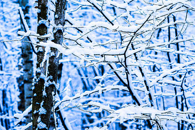 Christmas Holiday Scenery Photograph - Winter Snow Forest 4 by Alexander Senin