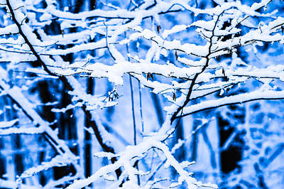 Christmas Holiday Scenery Photograph - Winter Snow Forest 5 by Alexander Senin