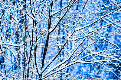 Christmas Holiday Scenery Photograph - Winter Snow Forest 7 by Alexander Senin