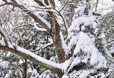 Photograph - Winter Snow Scene In New England by Staci Bigelow