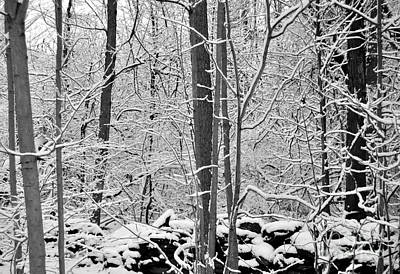 Photograph - Winter Snow Scene In The Woods by Staci Bigelow
