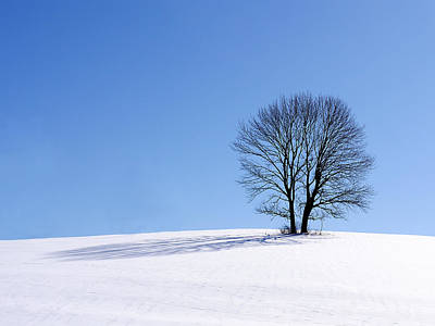 Photograph - Winter - Snow Trees by Richard Reeve