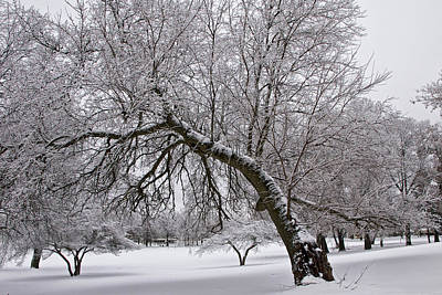 Photograph - Winter Snowfall At Garfield Park No. 0988 by Randall Nyhof
