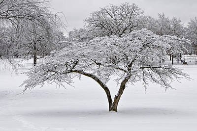 Photograph - Winter Snowfall At Garfield Park No. 0996 by Randall Nyhof