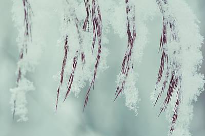 Photograph - Winter Softness by Ari Salmela